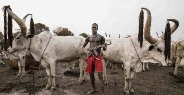 Gov Dalong declares curfew as herdsmen kill 2 soldiers, 2 policemen, 23 others
