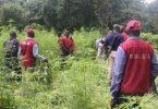 KEBBI: Notorious female hemp dealer escapes NDLEA net