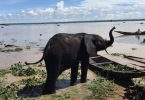 Elephants sighted in Kebbi creates excitement