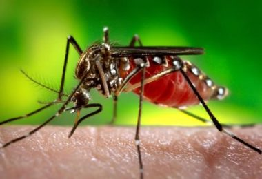 New research reveals Zika virus may be likely cure for brain cancer