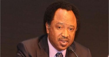 APC PRIMARIES: Shehu Sani offered me N10m bribe, Electoral C'ttee chair claims