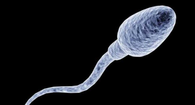 Sperm banks in space could soon become a reality, reports say