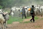 Return to the North, NEF, CNG orders Fulani herdsmen