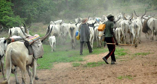 Return to the North, NEF, CNG orders Fulani herdsmen