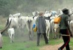 Novel! Miyetti Allah makes case for mordern ways of cattle rearing