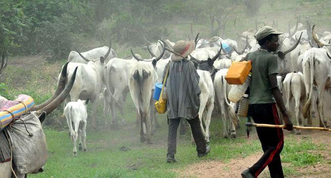Novel! Miyetti Allah makes case for mordern ways of cattle rearing