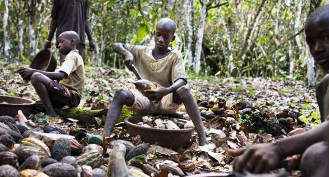 ILO cautions Nigerian gold, cocoa buyers of impact on child labour